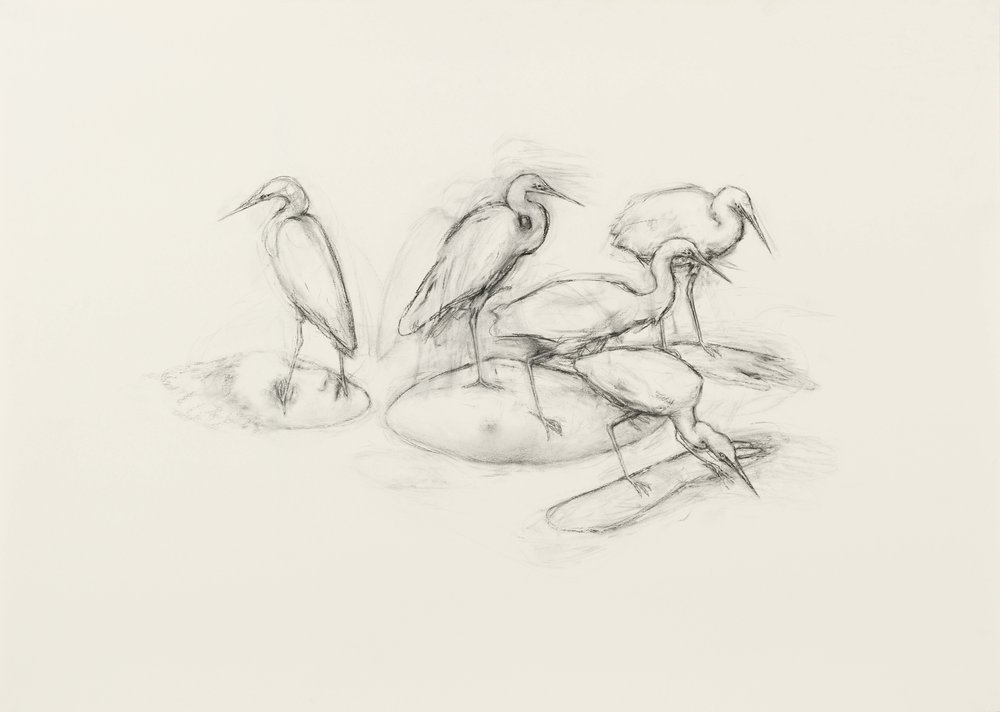 "Juul Kraijer| Untitled | Charcoal on paper | 43.5"" x 55"" | 2012"