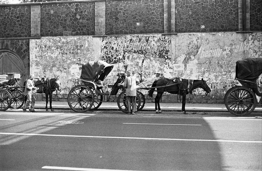 "Horses on Charni Road Bombay 1977 | Archival pigment print | 24"" X 35"""