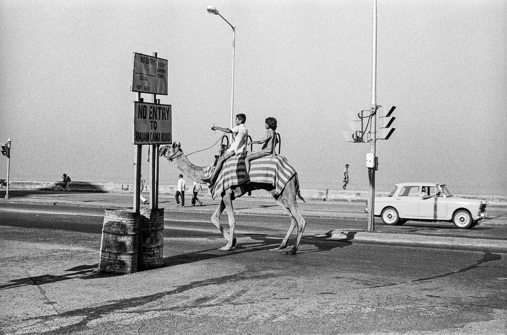 "Camel on Marine Drive Bombay 1977 | Archival pigment print | 24"" x 35"""