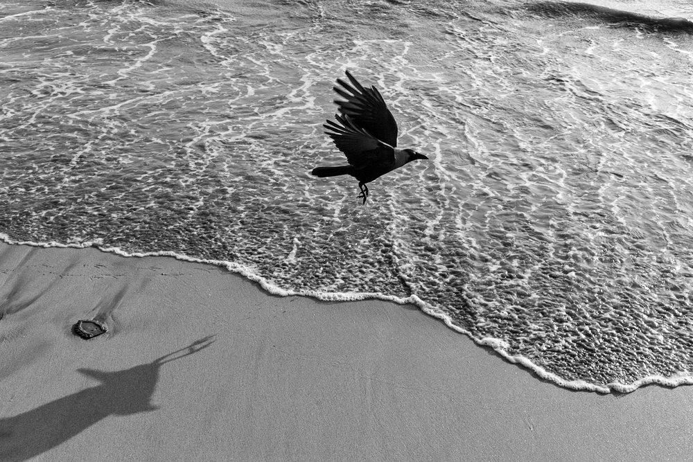 "Crow at Marine Drive Mumbai 2017 | Archival pigment print | 24"" x 35"""
