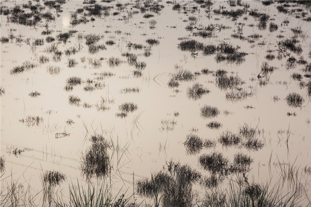 "Untitled - III | Archival pigment print  | 5"" x 7"" | 2018"