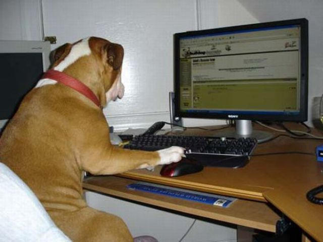 Funny-dog-operating-computer