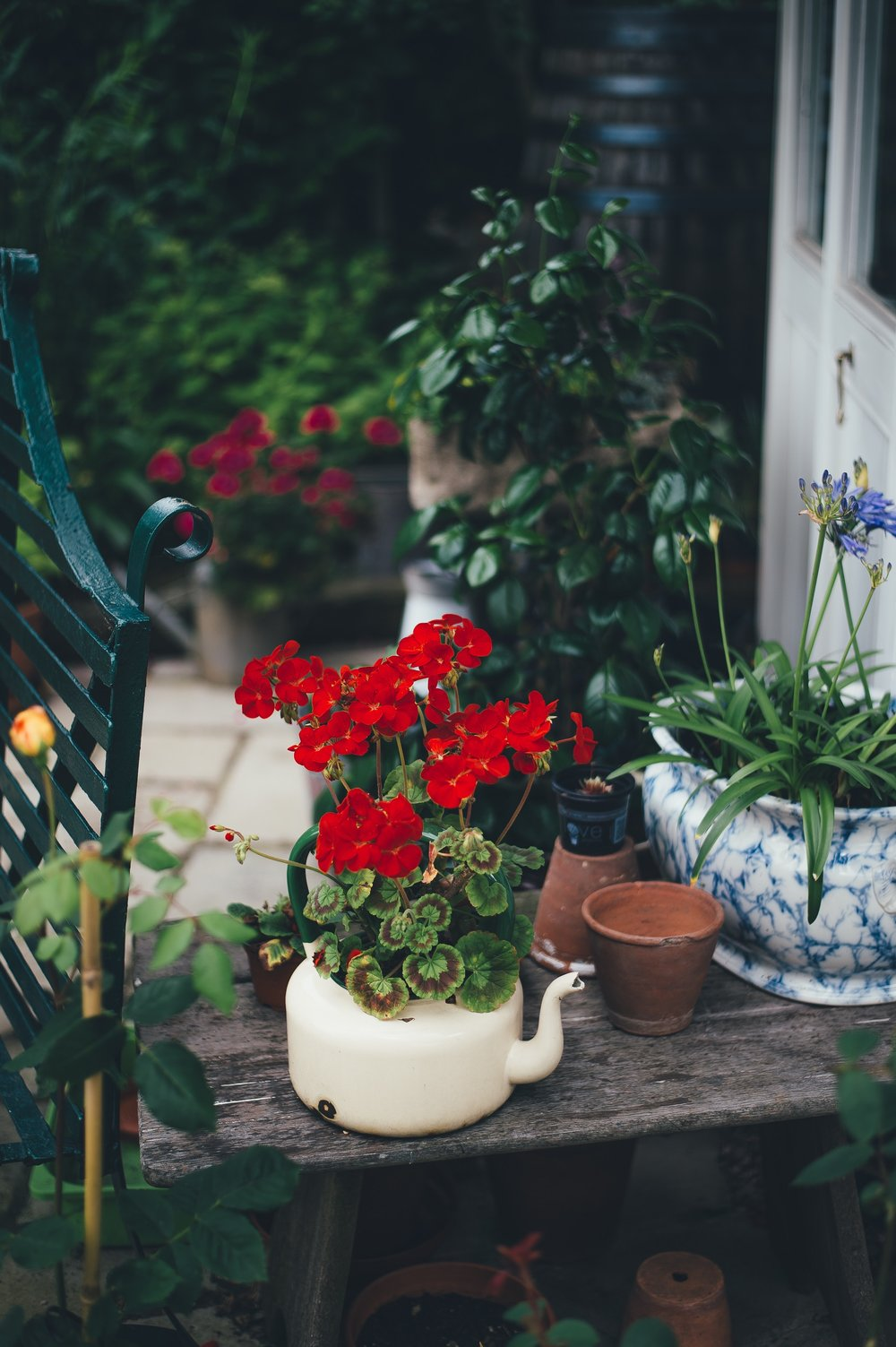 Plants thriving even in small places near you can bring happiness. Photo by  Annie Spratt  on  Unsplash