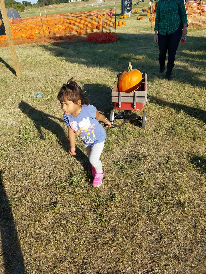 Flower Mound Pumpkin Patch 2017