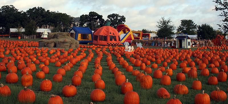 Flower Mound Pumpkins.jpg