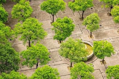 arbre ville.jpg