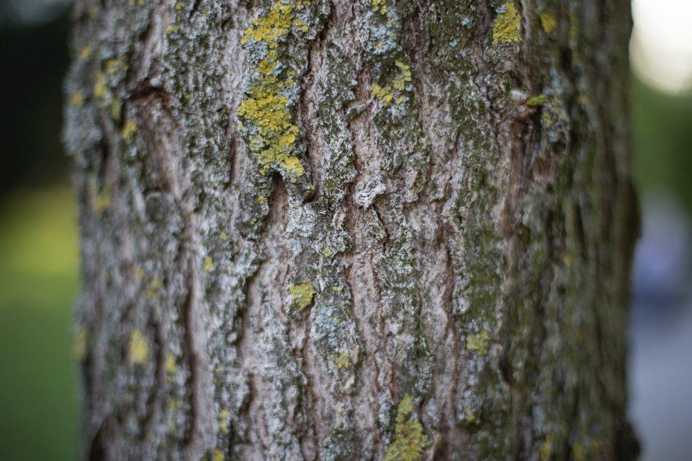 bark-forest-nature-89024.jpg