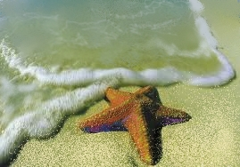 starfish_on_beach2.jpg