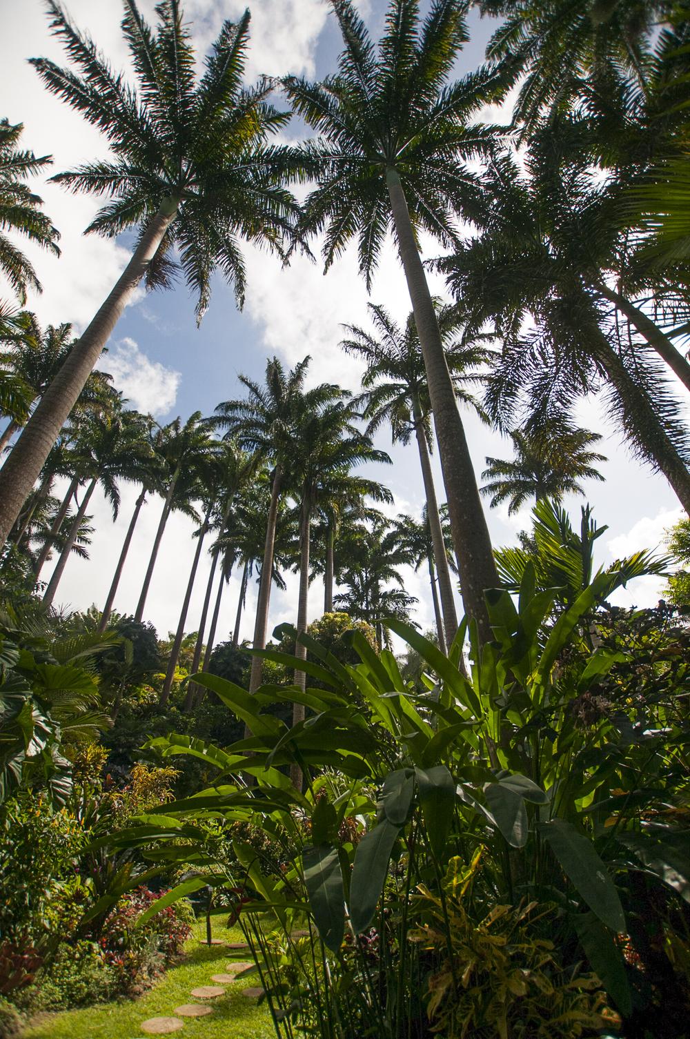 Barbados16-131.jpg