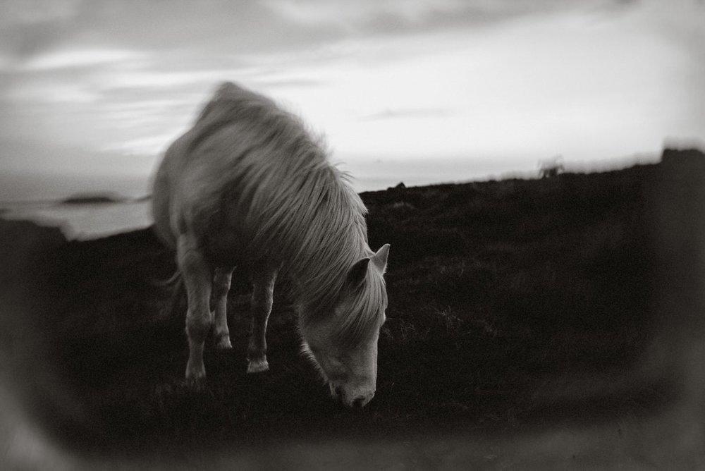 Ponies-180016.jpg