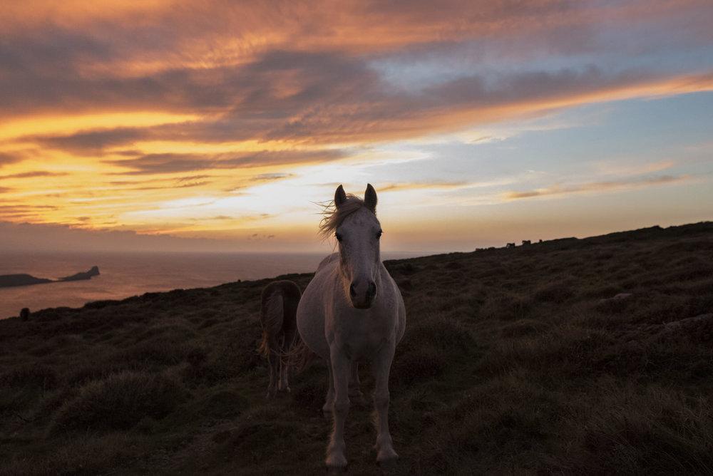 Ponies-14.jpg