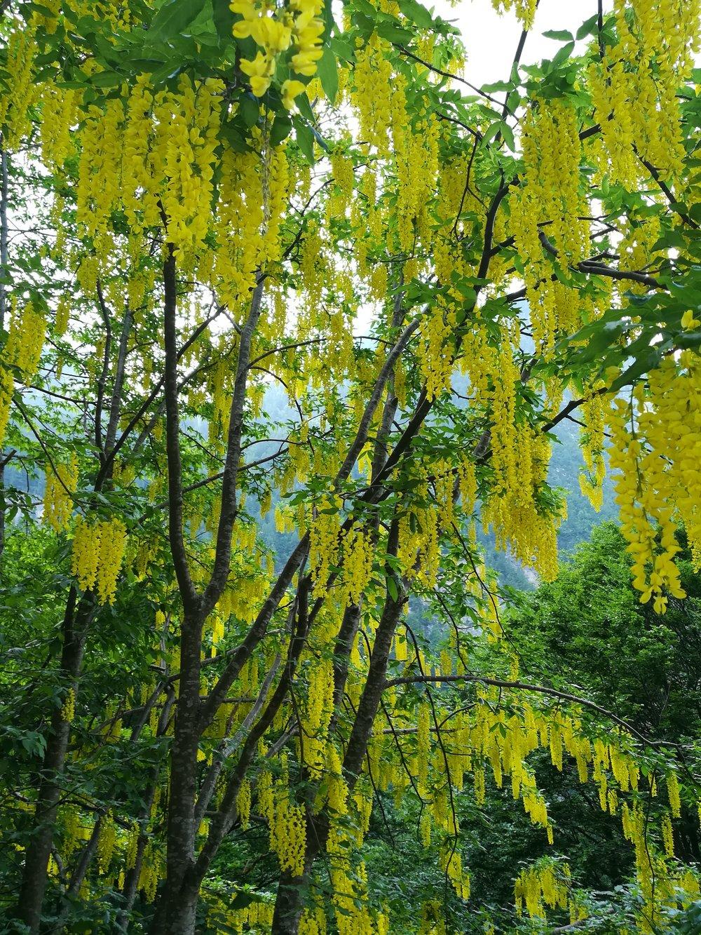 Non ci sono parole per descriverne la bellezza......potete provare....chiudete gli occhi, pensate a qualcosa di fresco e colorate tutto di giallo.......