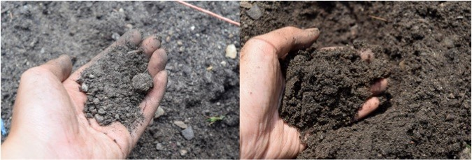 Dry and wet soil