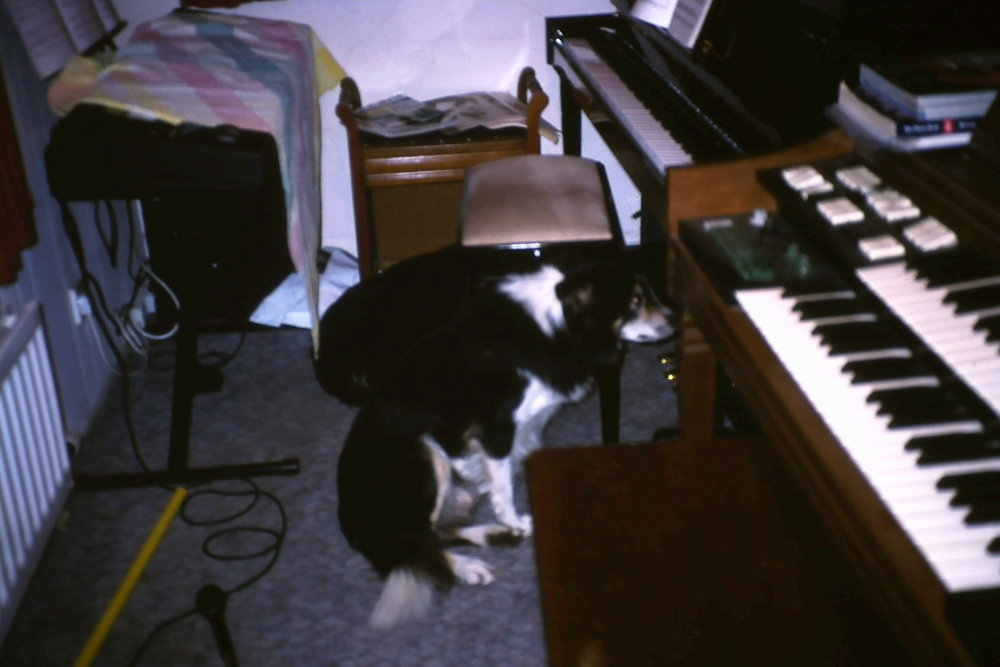 The old setup I had at my childhood home - An old piano, very old two manual organ and a new keyboard (plus two dogs, Rebel and Beau)