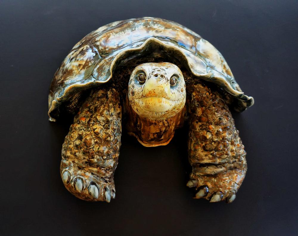 """Gigi"" Wall hanging Galapagos Tortoise sculpture 16""X16""X10."