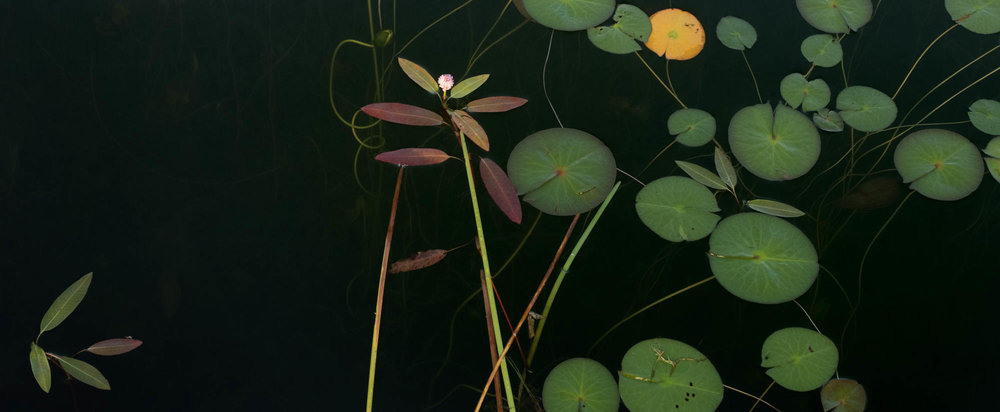Composition No.3Jane Fulton Alt_ Water Lilies.jpg