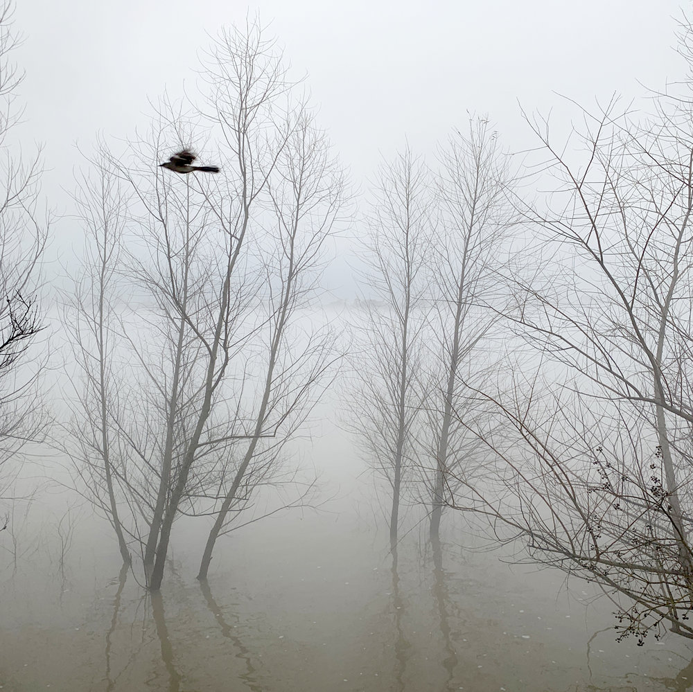 Bird in Flight.jpg