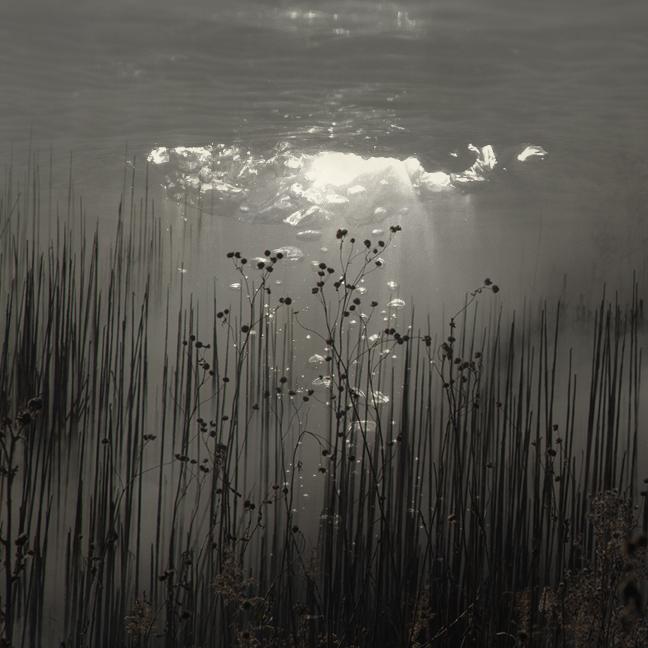 Reeds and Light.jpg