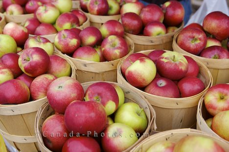 In New England, eating seasonally means lots and lots of apples.