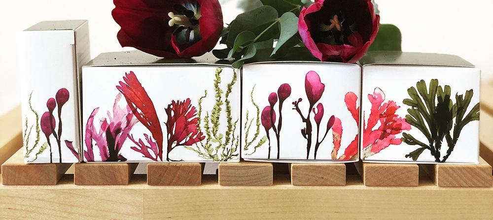 seaweedgarden-1_ForWebsite.jpg