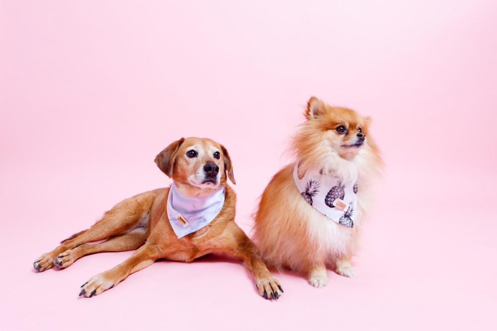 DogPhotos3