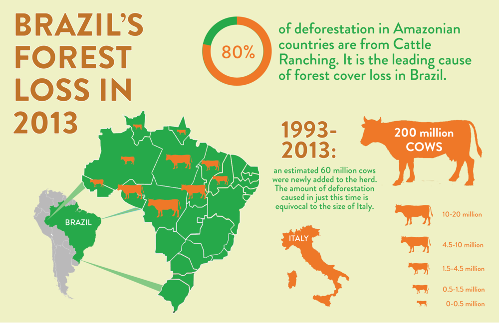 Brazil's Forest Loss in 2013.png