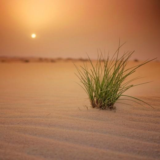 Arabian-Desert-520x520.jpg