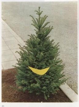 juniperus77706.jpg