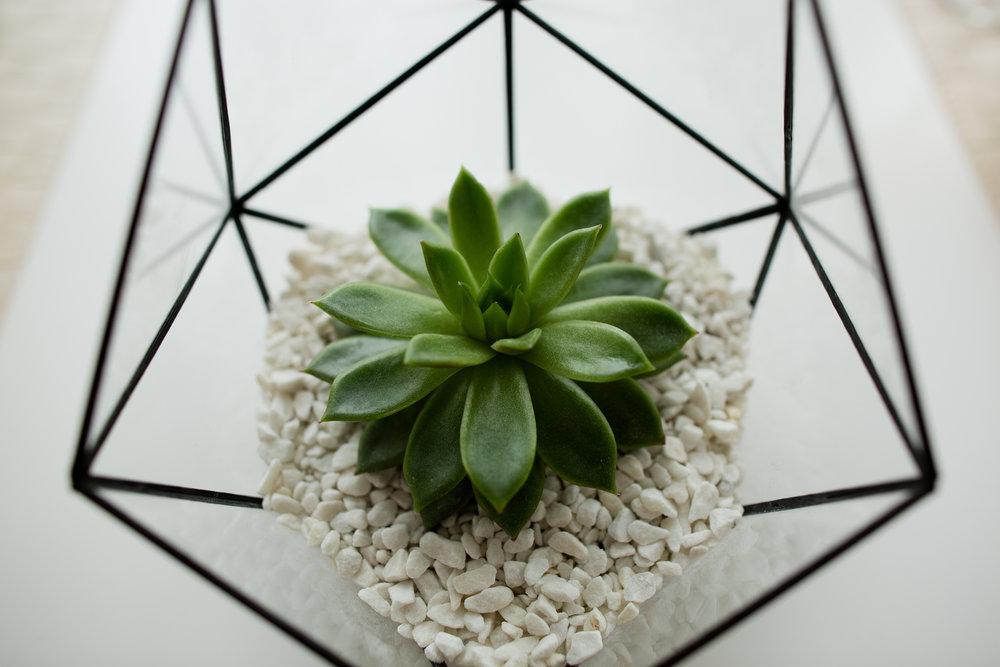 Green succulent in a glass pot in white loft interior in scandinavian style