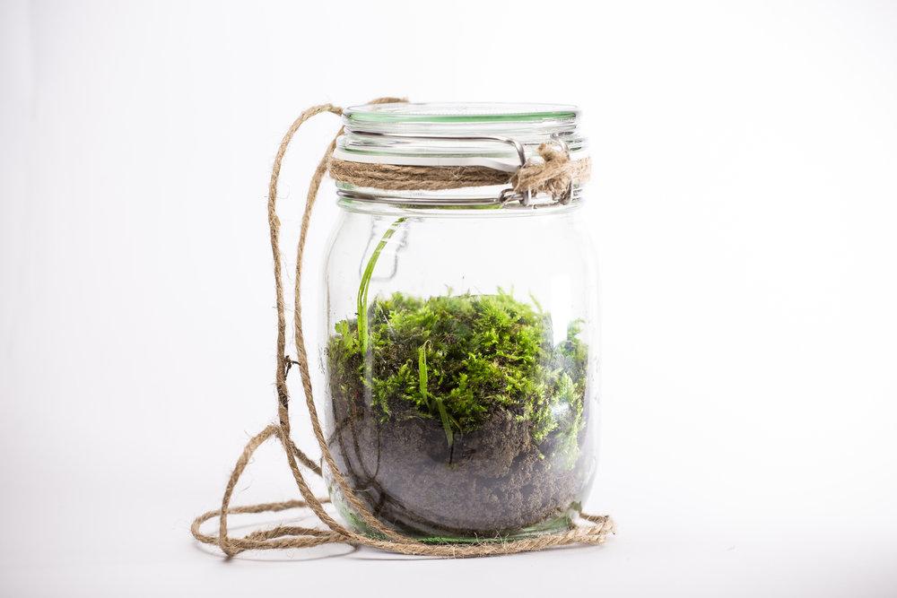 Ewiges Terrarium im Einmachglas