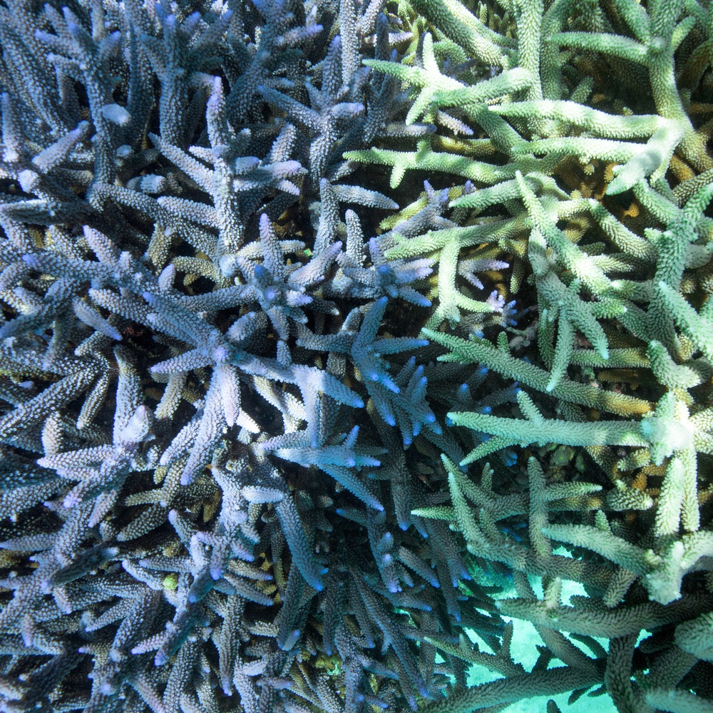Underwater magic: Colourful coral