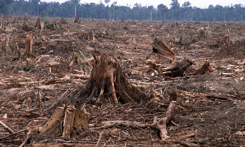 Deforestation to meet the global supply of wood