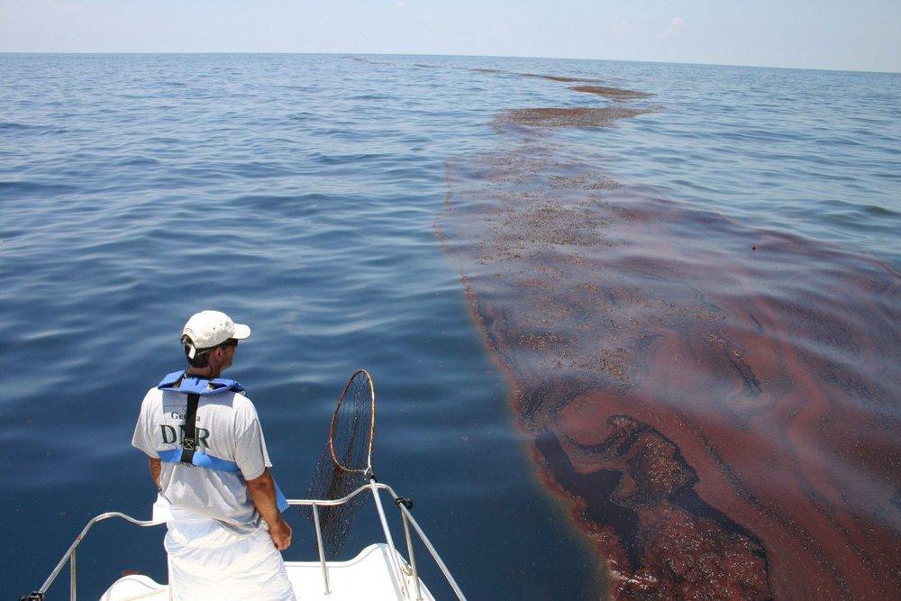 sargassum-oil-deepwater-horizon.jpg