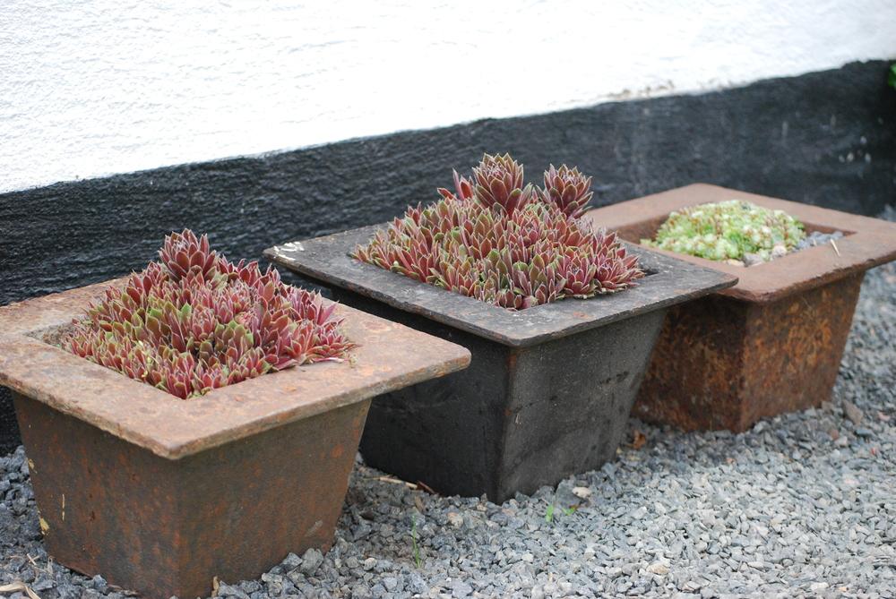 Bild från Ulla Molins trädgård i Höganäs.