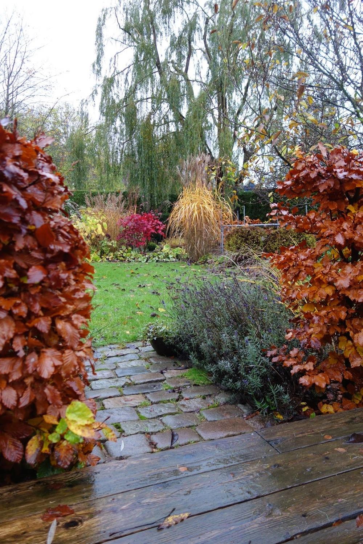 Acer Palmatum Margaret Bee Almbacken Trädgårdsdesign