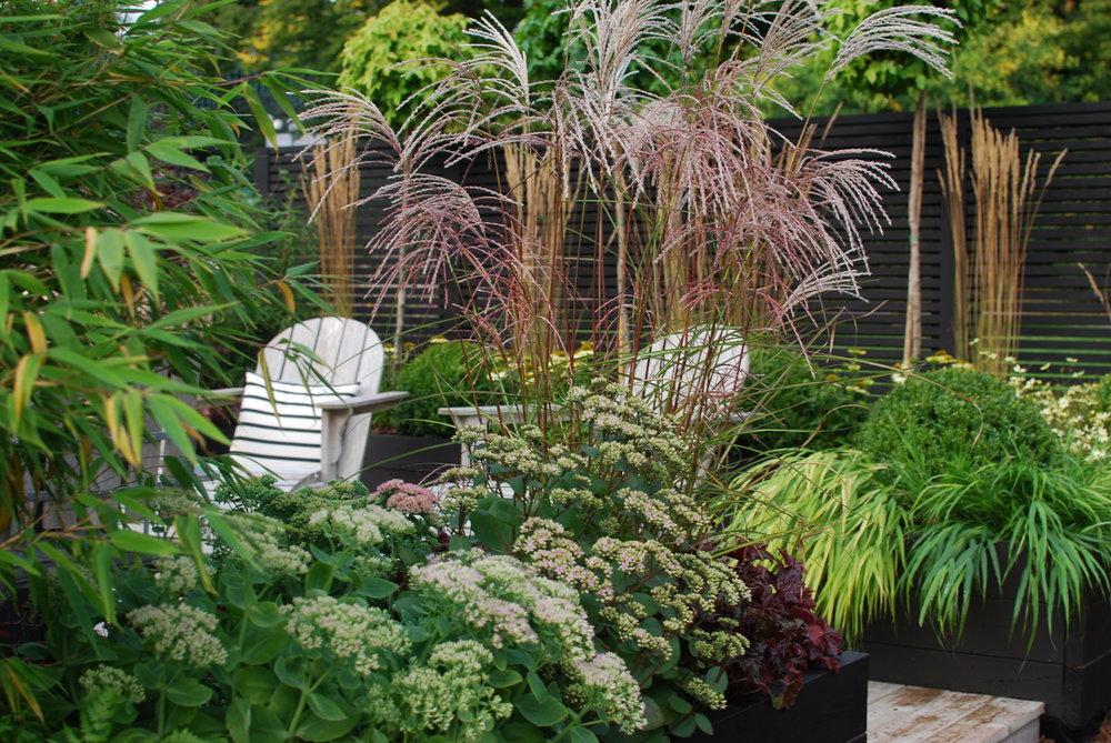Kärleksört 'Matrona', kärleksört 'Herbstfreunde', bambu 'Blue Dragon', hakonegräs, glansmiskantus 'Grosse Fontäne', alunrot 'Palace Purple'.