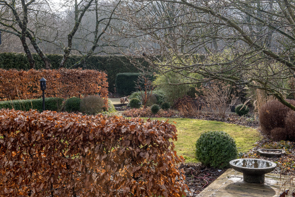 Bokhäckar, formklippt idegran, buxbom och liguster, magnolia, körsbärsträd och liten Norwichterrier.