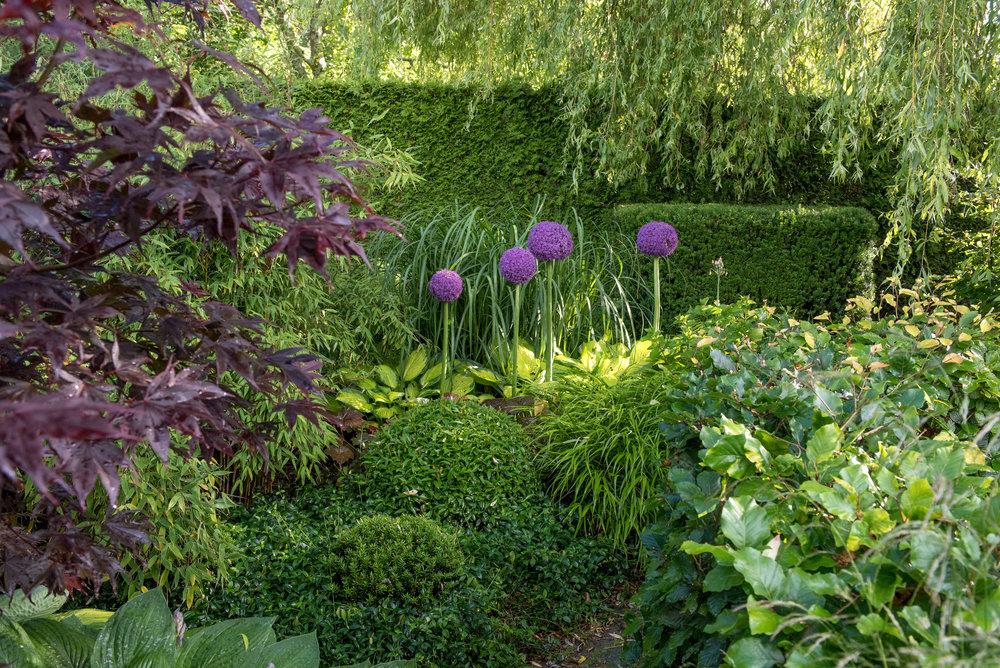 Japansk lönn 'Margaret Bee' (acer palmatum 'Margaret Bee'), vinca minor 'Alba', hosta 'Gold Standard', hakonegräs (Hakonechloa macra), Miscanthus Sinensis 'Malepartus', klot av ideran och liguster, alunrot 'Palace Purple' (Heuchera 'Palace Purple')