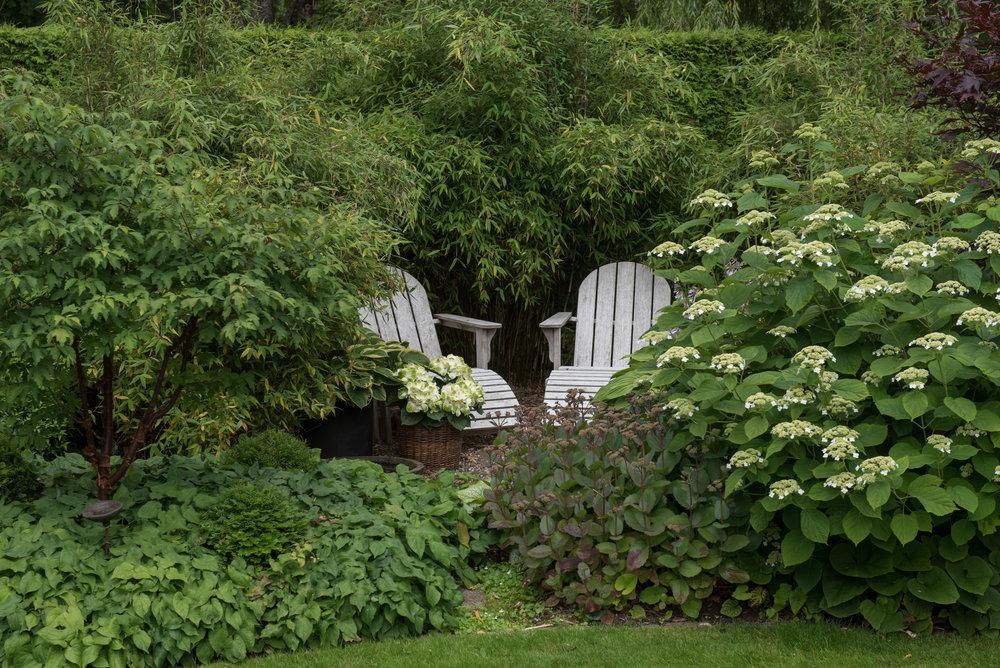 Kopparlönn (Acer griseum), röd sockblomma, kärleksört 'Matrona' och hortensia av okänd sort.