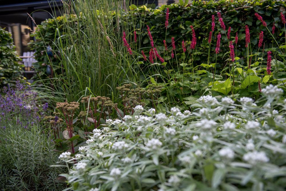 Bistorta amplexicaulis 'Speciosa', Sedum 'Matrona', Calamagrostis 'Karl Foerster' och Anaphalis triplinervis