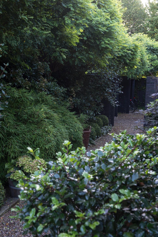 Klotrobinior, bambu 'Bimbo', klätterhortensia, hybridolvon 'Burkwoodii', buxbomsklot och i förgrunden uppstammade klot av järnek.