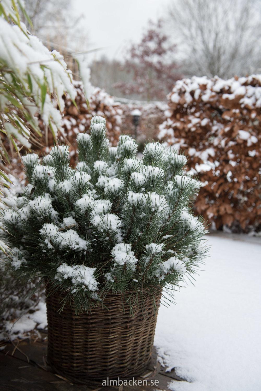 snö (1 of 11).jpg