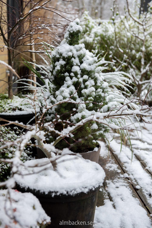 snö (9 of 11).jpg