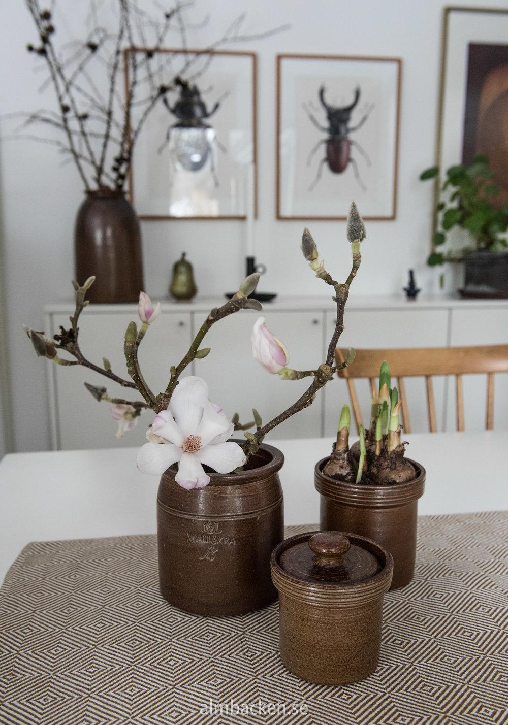 Magnolia-wallåkra-6.jpg
