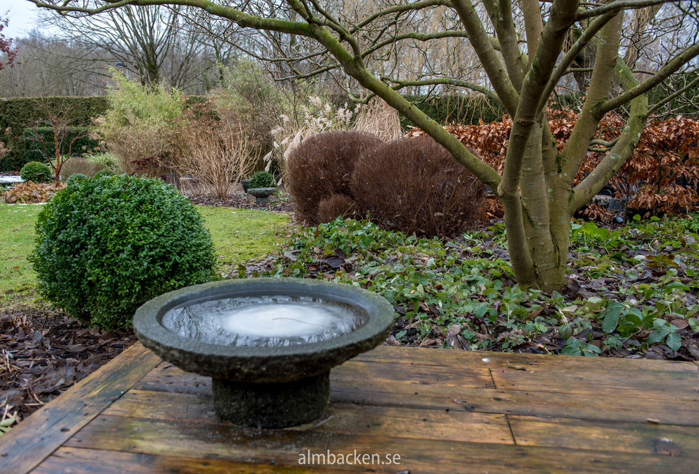 Buxbom-Fågelbad-granit-magnolia-Almbacken-3.jpg