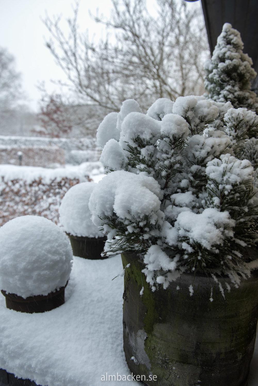 wintergarden-2.jpg
