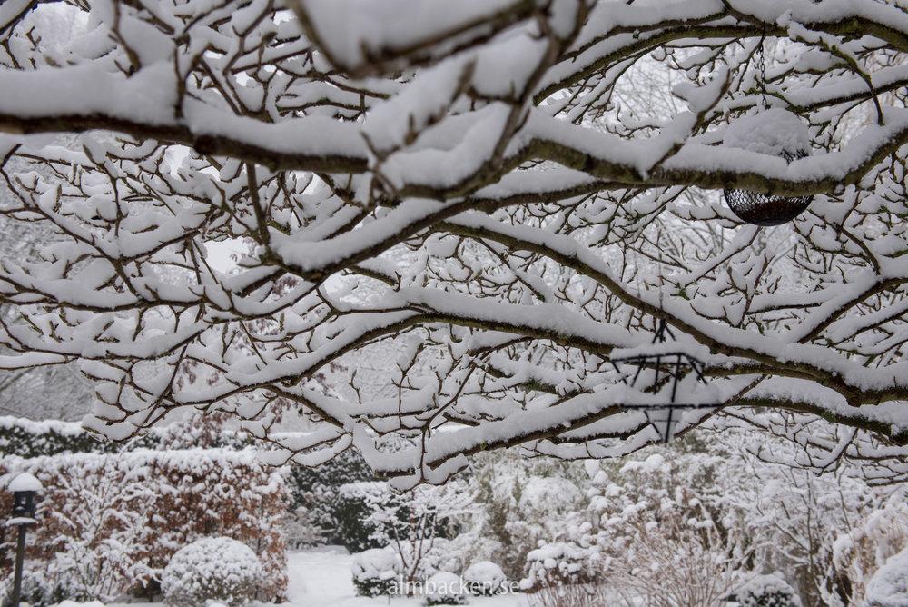 Wintergarden-4.jpg