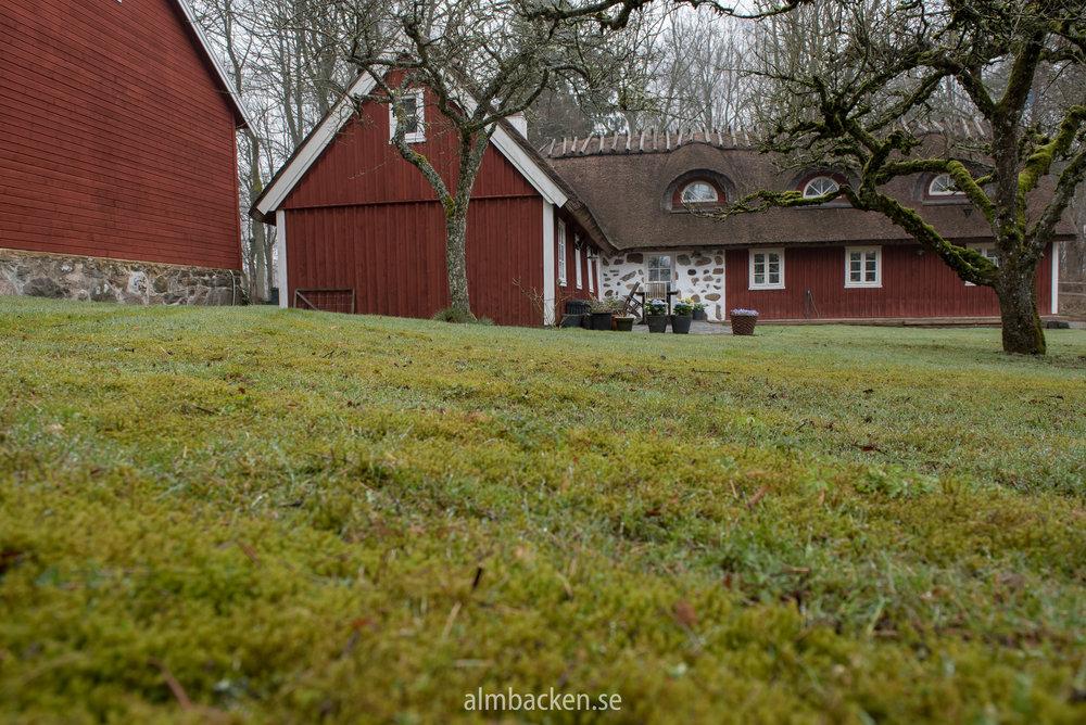 Mossa-gräsmatta-problem-Algomin.jpg