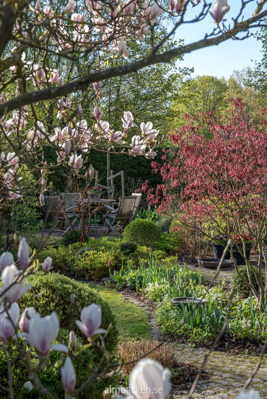 praktmagnolia-magnolia-acer-palmatum-margaret-bee.jpg