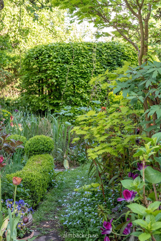 Helenas trädgård-4.jpg